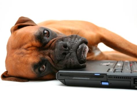 sad computer dog